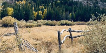 Fence, field and trees