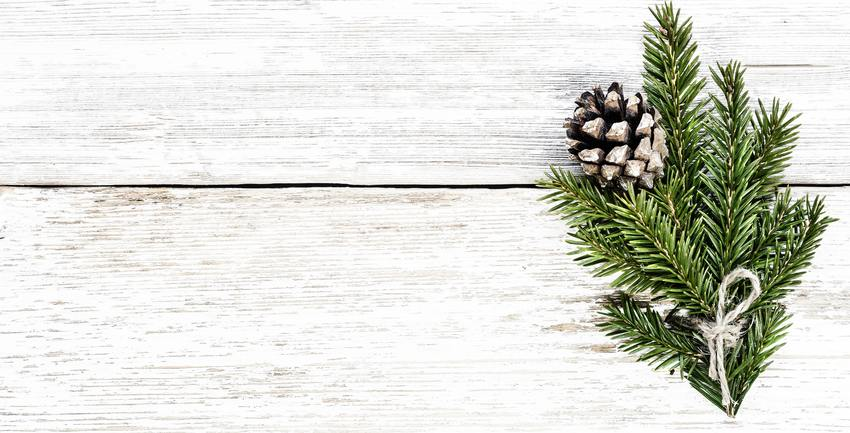 pine and pine cone against white wood used for winter storage tips article | AllStorage