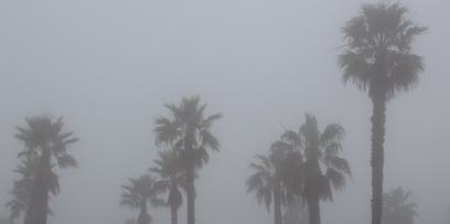 palm trees in storm used in winter storage tips for arroyo grande, CA | Central Coast Storage